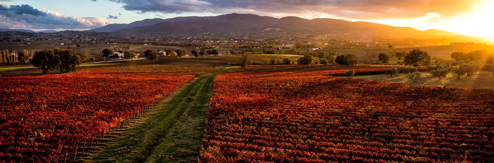 Perticaia wine farm - Montefalco
